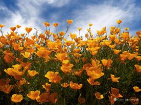 """Up Above my Head"" - California"