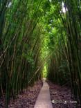 """""""Green Heaven"""" - Maui, HI"""