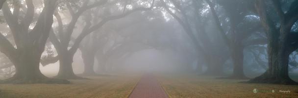 """A Southern State of Mind"" - Louisiana"
