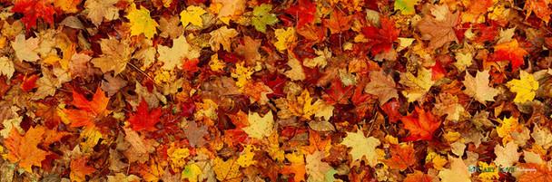 """""""Seasons"""" - Vermont"""