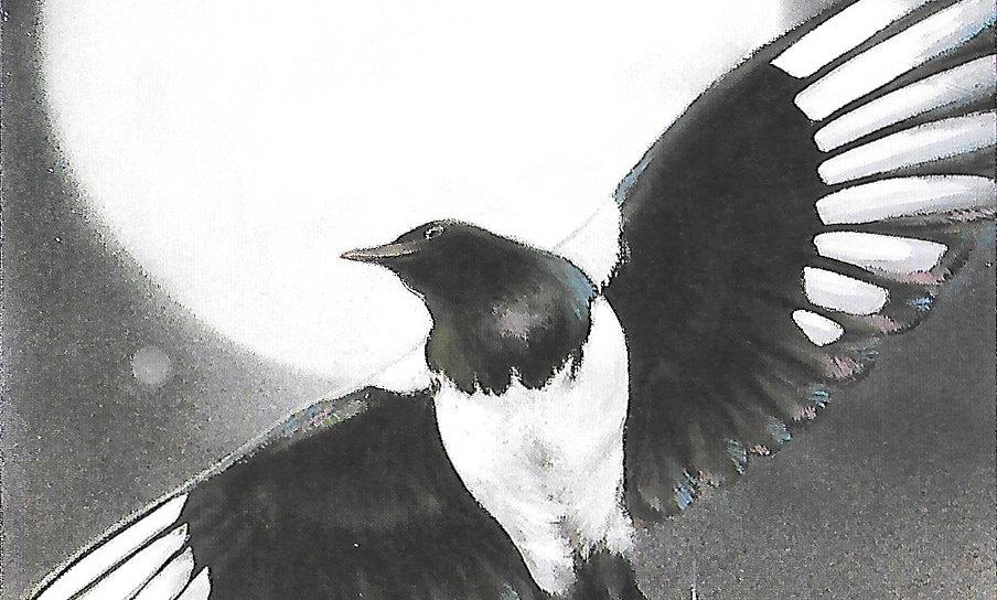 Magpie Crowfair Moon Dancer notecard