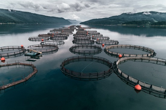 AI Applied to Aquaculture Aims for Improved Efficiency, Healthier Fish - B-AIM pick selects