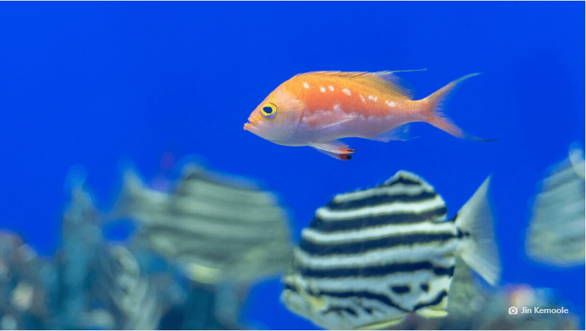 Alphabet's AI-powered camera system will help fish live their best lives-B-AIM PICK SELECTS