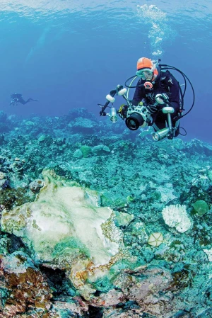 Speeding up coral reef conservation with AI-aided automated image analysis