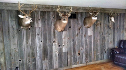 Weathered Barn Siding Accent Wall