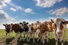 Круглий стіл у галузі «Виробництво молочних продуктів»