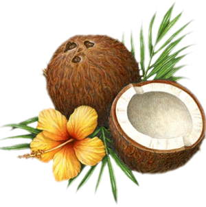 huile-noix-coco.png