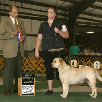 Winners bitch and Best of Opposite sex at Warren County Kennel Club 5/25/12