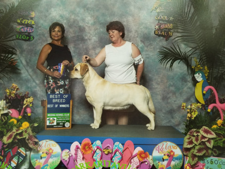 Winners bitch, Best of Winners and Best of Breed Medina Kennel Club 6/19/21 (1 pt)