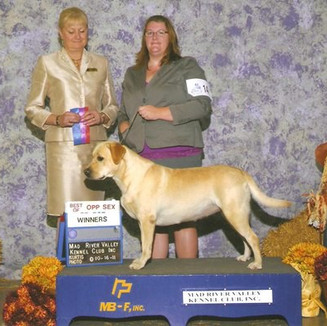 Winners bitch and Best of Opposite sex at Mad River Valley Kennel Club 10-16-11