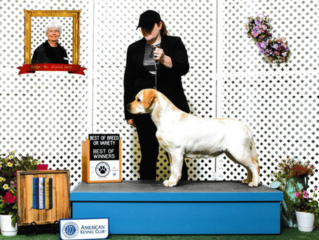 Best of Breed and Best of Winners at Crawford County Kennel Club 5/9/21 (2 points)
