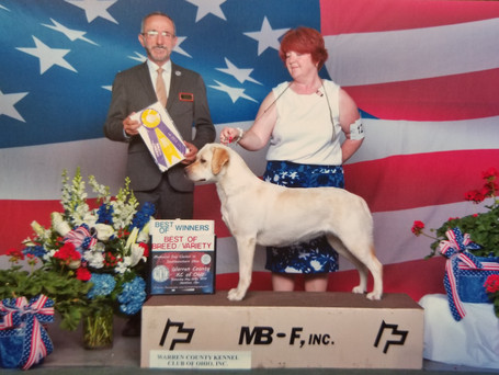 Winners bitch, Best of Winners and Best of Breed at Warren County Kennel Club May 26, 2018