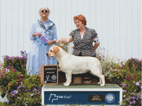Winners bitch for a 3 point major at Ann Arbor Kennel Club  July 10, 21