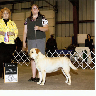 Winners bitch and Best of Opposite Sex at Crawford County Kennel Club 5/26/12