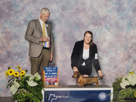 Winners bitch, Best of Winners and Best of Variety for a Major win at Huntington Kennel Club 7/11/21