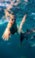 Nadando_con_tiburones_Sud%25C3%2583%25C2