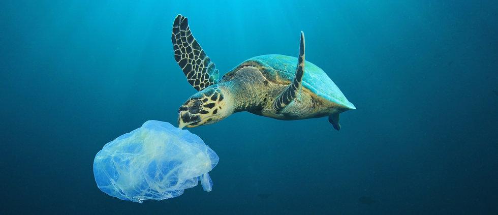 Plastic%2520Polluted%2520Ocean_edited_ed