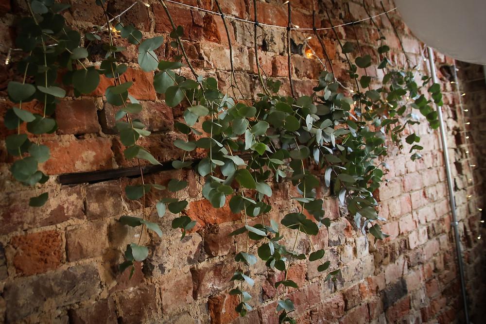 Eucalyptus Curtain
