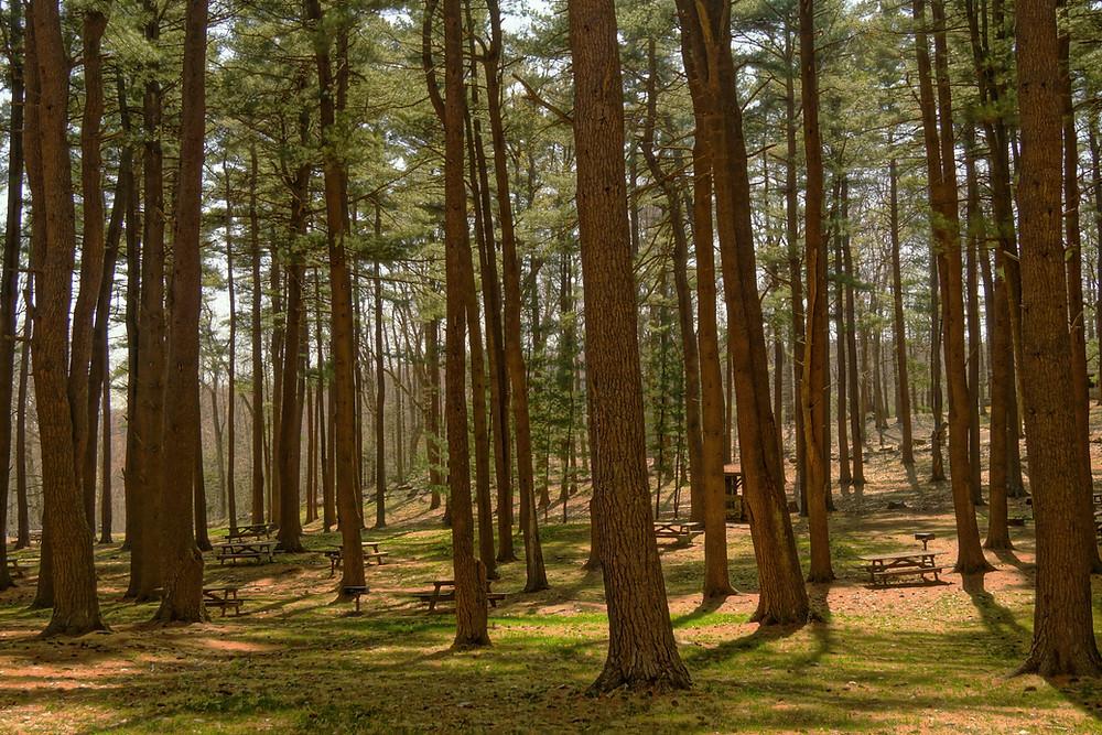 Bien-être et santé en Nature, en forêt