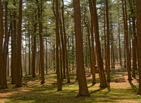 Wälder in Deutschland sind wichtige Kohlenstoffsenke