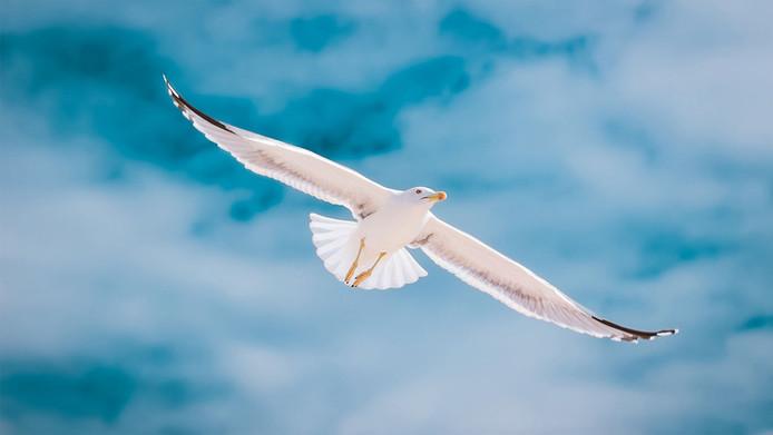 seagull-2444497.jpg