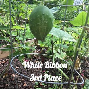 Homegrown Cucumber