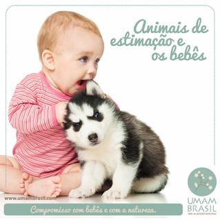 Animais de estimação e os bebês