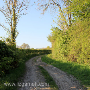A byway near the home of Liz.