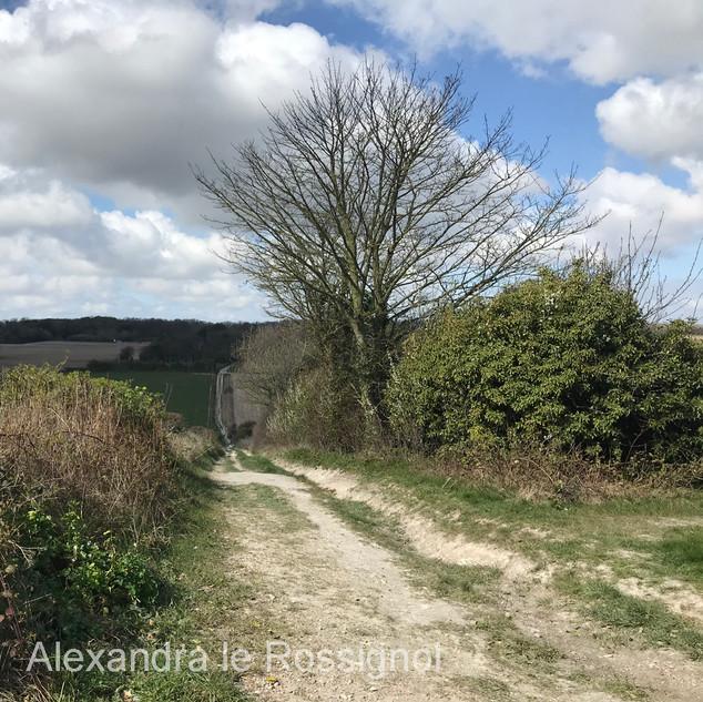 A track near the home of Alex