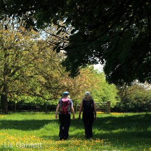 Walking through a buttercup meadow.