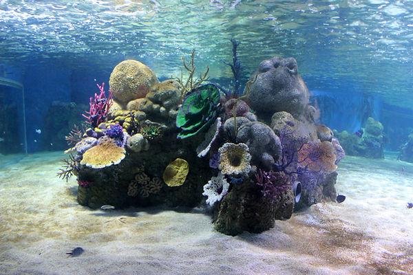 אלמוגים בגלריית הים האדום ב