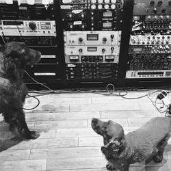 DomHowardMusic_Cube_Dog
