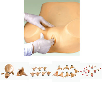Advance Gynecological Training Model