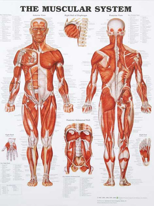 Imported Anatomical Charts