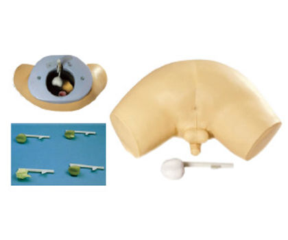 Prostate Inspection Model