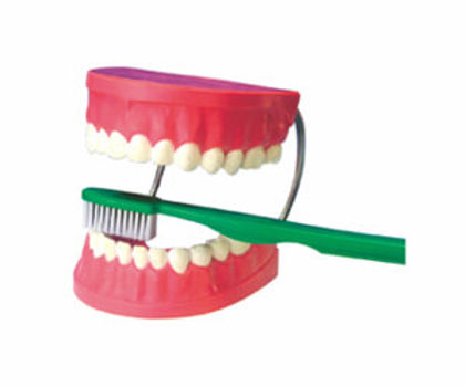 Giant Dental Care Model With Toothbrush