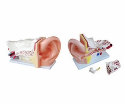 New Style Giant Ear Model