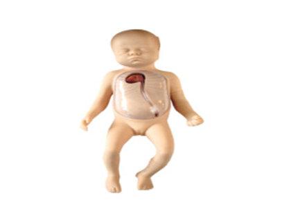Advance Neonatal Peripheral & Central Vein Intubation Simulator