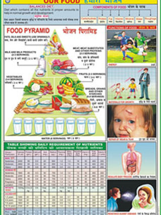 Charts On Food And Nutrition - Set Of 10 Charts