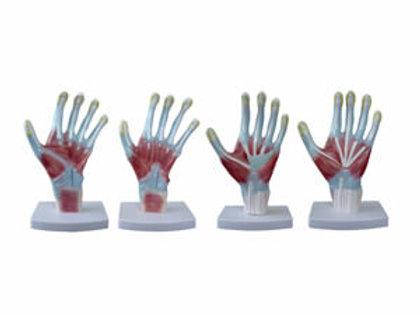 Palm Anatomy