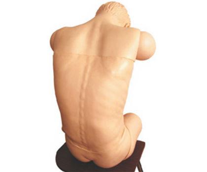 Comprehensive Punctured Simulator(anteverted Sitting Position)