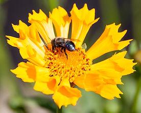 IMG_9821_flower.jpg