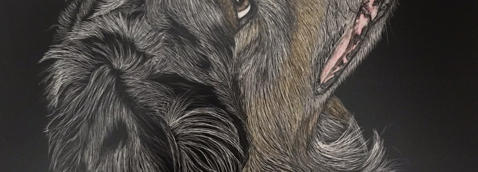 Pet scratchboards made to order by Chandra Jennings
