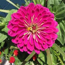 Flora and Fauna pink flower.jpeg