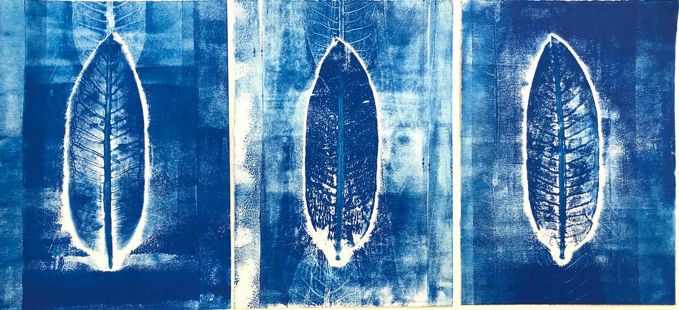 Milkweed Penumbra by Anne Harrington Hughes