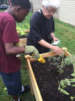 Planting vegetable seeds.