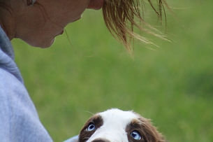 Australian Shepherd, Miniature Australian Shepherd and Toy Australian Shepherd