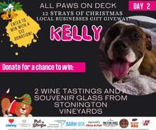 Kelly - Yonkers Animal Shelter