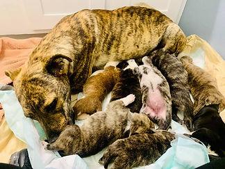 Mama and puppies.jpg