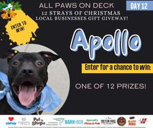 Apollo from ACCNY